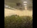 Плантация травы