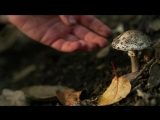 This Mushroom Starts Killing You Before You Even Realize It (Deep Look)