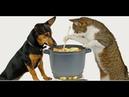 ПОПРОБУЙ НЕ ЗАСМЕЯТЬСЯ - Смешные Приколы с Животными до слез, смешные коты, funny cats 100