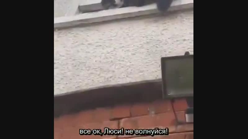 Пришёл кот- маньяк)