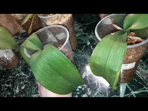 Реанимация орхидей в цеофлоре Солнечные ожоги не миновали и меня