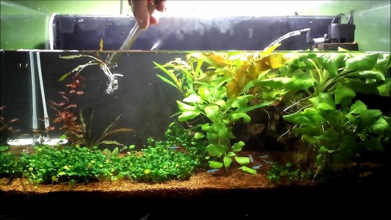Перезапуск аквариума. Часть 1 готовлю новые аквариумные растения, убираю лаву