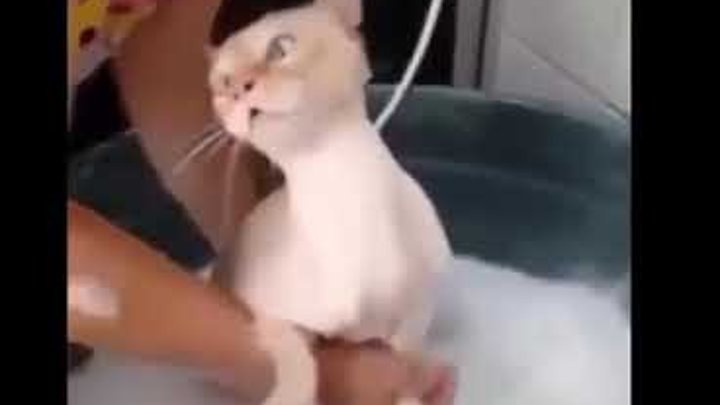 Реакция Кота на воду, РЖАЧ