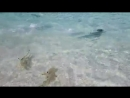 Shark Attack in Maldives Vacation_ Best House