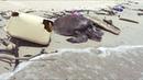 Пугающая находка океан погибает от миллионов тонн мусора