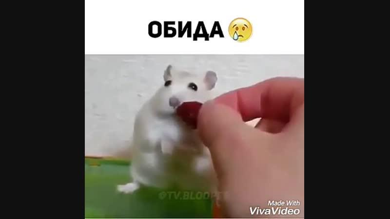Обида ( (360p).mp4