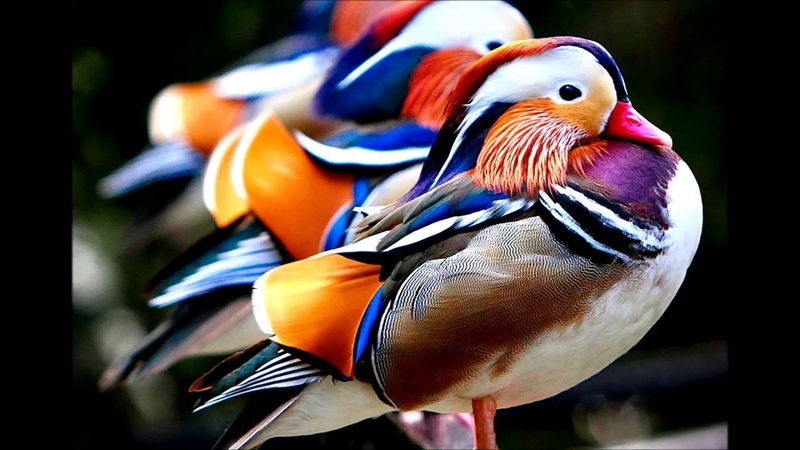 Bird's Eye View - Muthspiel Grigoryan Towner (From a Dream 2008)