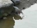 Птичка ловит рыбу на приманку