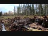 Выводы экологов. Чем опасны полигоны и почему они так вредны? Шиес