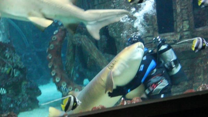 Кормление акул