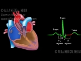cardiac conduction system ECG animation