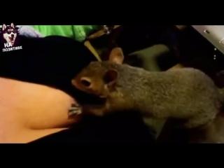 ЛУЧШИЕ ПРИКОЛЫ С ЖИВОТНЫМИ 2017 Best funny animals Videos