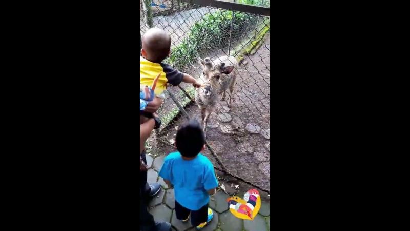 Zoo Bandung Indonesia