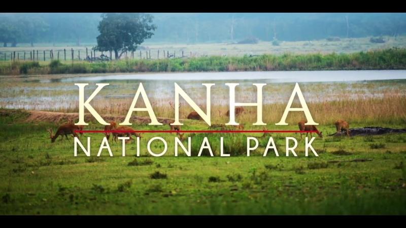 Нац. парк Канха - Живая природа - Мадья Прадеш - Индия (Kanha National Park _ Wildlife _ Madhya Pradesh)