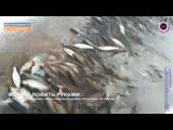 Мегаполис - Можно ловить руками - Сургутский район