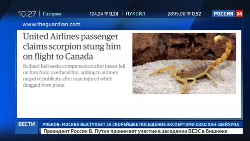 Новости на Россия 24 • Пассажира United Airlines во время полета ужалил скорпион