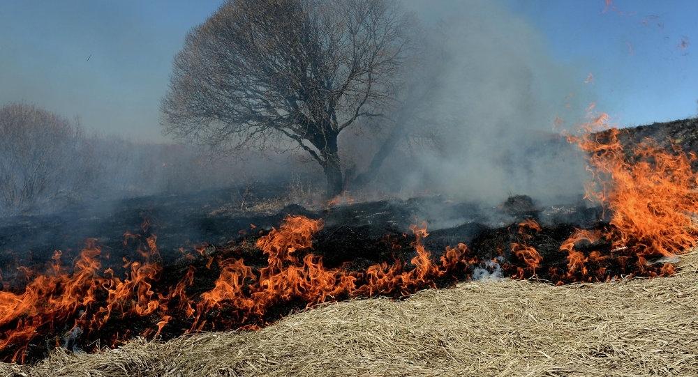 Администрация Красносулинского района установила причины большого числа ландшафтных пожаров.