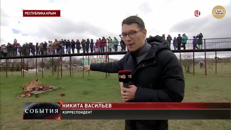 ТВЦ. В крымском сафари-парке Тайган выпустили львов.