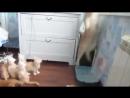 Кошка упала - котята в рассыпную))