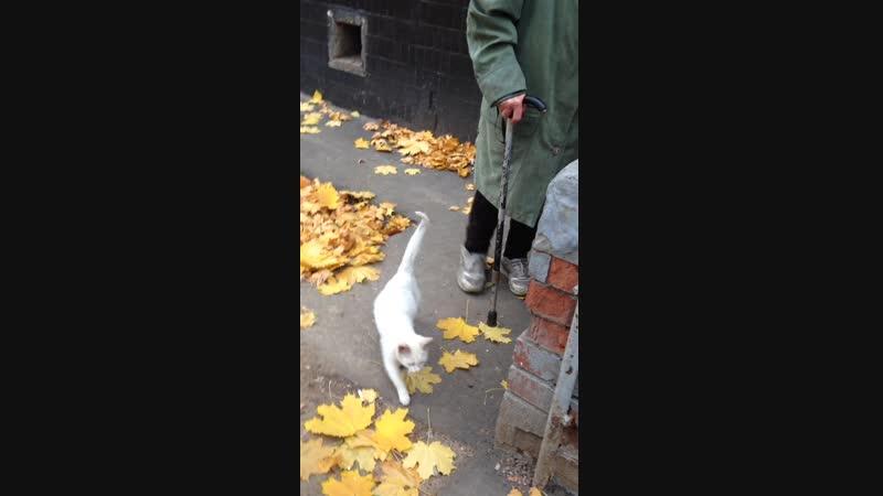 Белая кошка (около 6 мес., не путать со взрослой и уже стерилизованной Глазуньей)