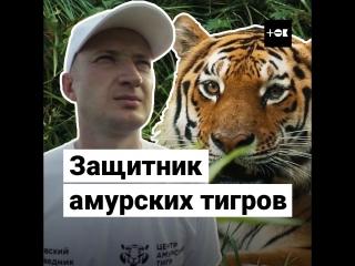 Спаситель амурских тигров