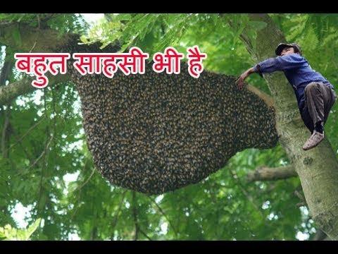Thánh bắt Ong mật kiếm tiền triệu mỗi ngày