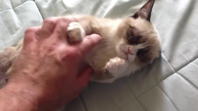 Mr Grumpy Cat [LOTUS]