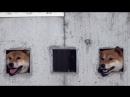 Реалити-шоу «За забором»: японец дал возможность своим собакам смотреть на прохожих