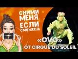 «OVO» от Cirque du Soleil: что скрывает закулисье шоу