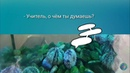 Морские ежи. 1-й внеконкурсный ролик конкурса забавных и трогательных аквароликов.