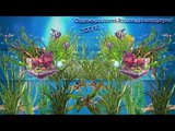 ТОП 10 водных растений России для аквариума (АКВА)