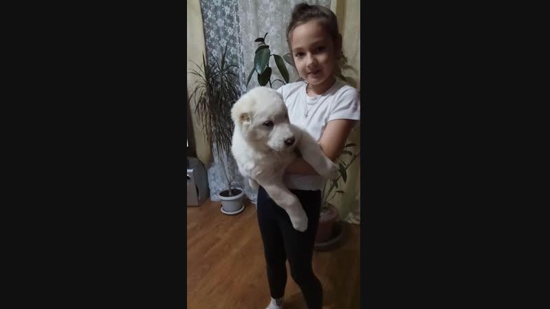 девочка оранжевый ошейник 54 дня питомниксарыдагдан