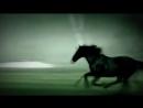 Красивые лошади