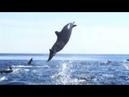 Shnobic - Дельфины бродяги Doom Rock/Post Rock