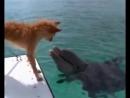 спасение щенка от акулы дельфином