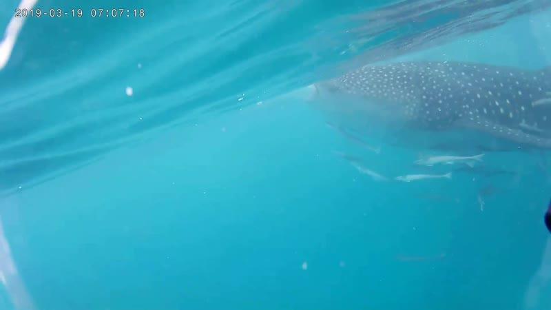 С акулами