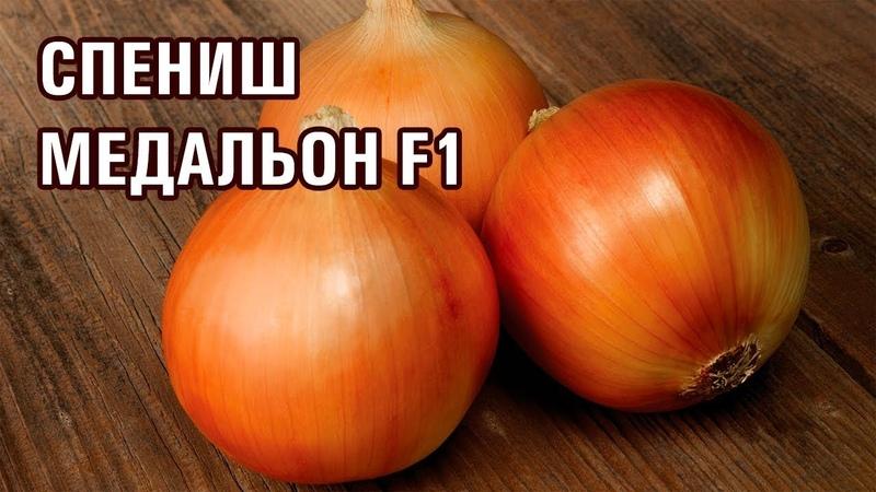 СПЕНИШ МЕДАЛЬОН F1 - САМЫЙ ПОПУЛЯРНЫЙ РАННИЙ ЛУК