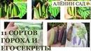 11 сортов гороха ВЫБИРАЕМ лучшие Секреты выращивания гороха