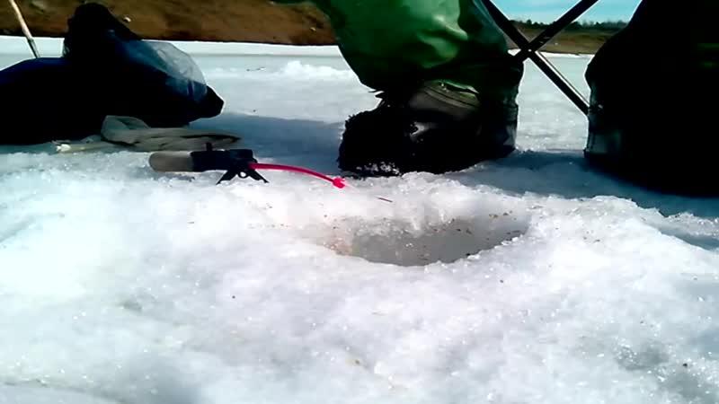 ТОП-5 Растительных насадок на зимней рыбалке.