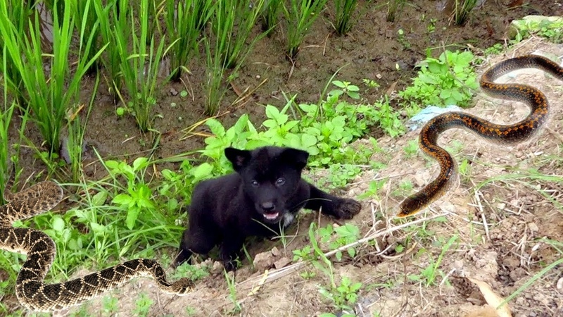 Incredible Dog Rescue: Puppy surviving at the mudflat ? Puppy Stranded on Underbrush
