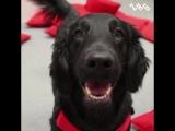 Собака - не только лучший друг человека, но и терпеливый учитель