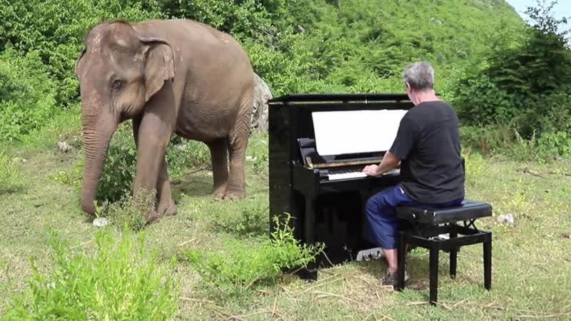 846 J. S. Bach - Prelude in C Major (WTK I.1) for elephant viewer