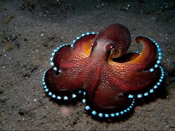 Смотреть всем Тайны океана Гиганский Осминог Документальный фильм