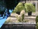 Фестиваль цветов пройдет в Струковском саду Самары