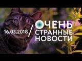 16.03 | ОСН #42. Цветы от кошки
