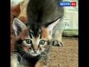 В Барнауле у кошки породы каракет, которая стоит миллион рублей, появились котята