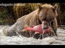 Захватывающий, драматический и приключенческий фильм для всей семьи «Медведь» (США-Франция)