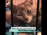 Слепого котенка подбросили к приюту в картонной коробке. Потом выяснилось, что это взрослая кошка, которая вовсе не слепа!