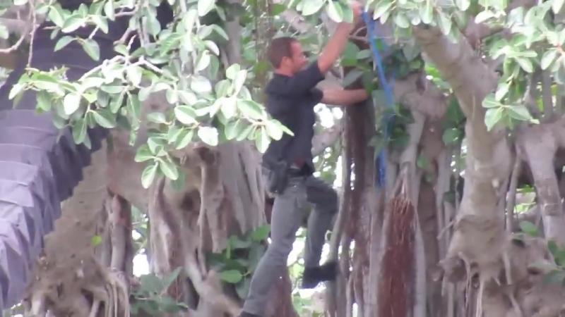 Alex O'Loughlin climbed tree save the Kite