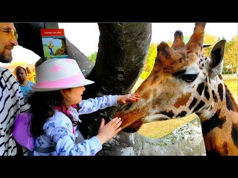 АЛИС в ЗООПАРКЕ! Все дикие животные - львы, тигры, медведи, волки, слоны и НАШИ ЛЮБИМЫЕ ЖИРАФЫ! 2